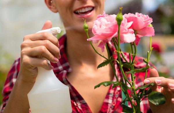 Pflanzenschutz - Rosen
