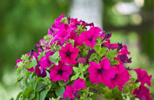 Tipps für die richtige Blumenerde