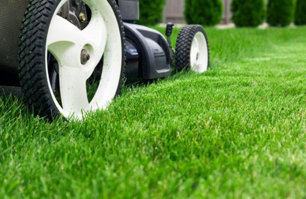 Ein schöner Rasen bedarf regelmäßiger Pflege
